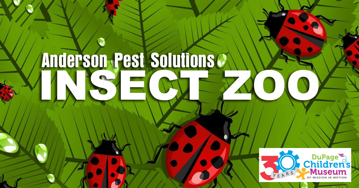 DuPage Children's Museum - Insect Zoo