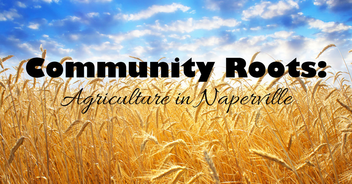 Community Roots:  Agriculture in Naperville